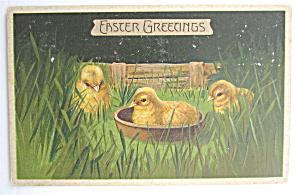 Three Baby Chicks Easter Postcard (Image1)