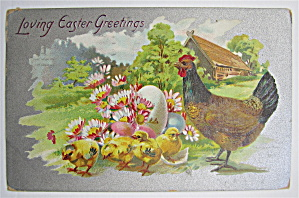Hen And Baby Chicks Postcard (Image1)