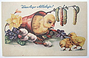 Mother Chick Watching Baby Chicks Postcard (Image1)