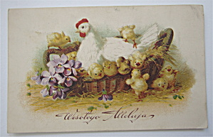 Mother Chicken Watching Baby Chickens Postcard (Image1)