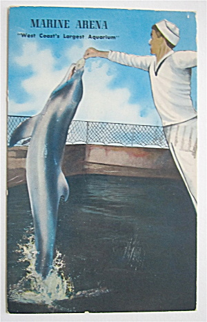 Frankie The Porpoise At Marine Arena Postcard  (Image1)