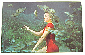 Pretty Betty Frazee Poses With School Of Fish Postcard (Image1)