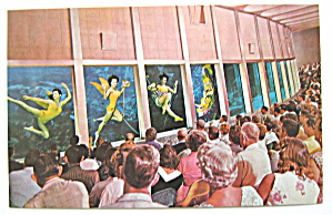 Weeki Wachee Visitors View Florida Mermaids Postcard (Image1)