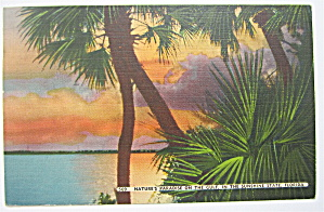 Nature's Paradise On The Gulf In Florida Postcard (Image1)