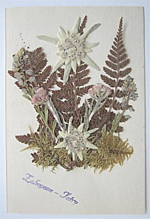 Dried Flowers Postcard (Image1)