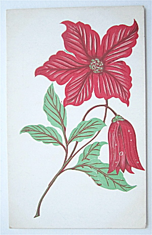 Red Poinsettia Flower Postcard (Image1)