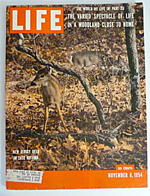 Life Magazine November 8, 1954 New Jersey Deer