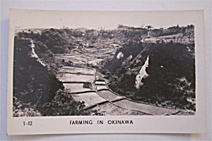 Farming In Okinawa Postcard
