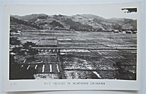 Rice Paddies In Northern Okinawa