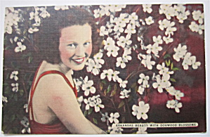 Arkansas Beauty With Dogwood Blossoms Postcard
