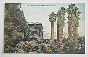 A Typical Garden In Southern California Postcard  (Image1)