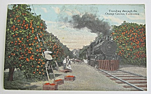Traveling Through The Orange Groves, California (Image1)