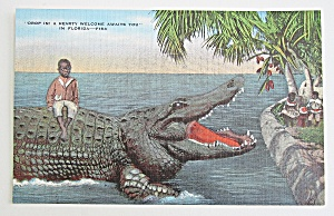 Little Boy Sitting On Alligator Postcard