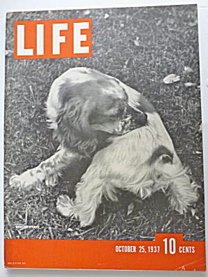 Life Magazine October 25, 1937 Hunting Spaniel (Image1)