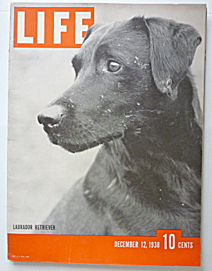 Life Magazine December 12, 1938 Labrador Retriever (Image1)