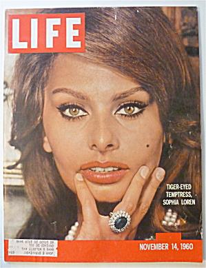 Life Magazine-November 14, 1960-Sophia Loren (Image1)