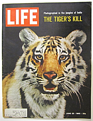 Life Magazine June 25, 1965 The Tiger's Kill