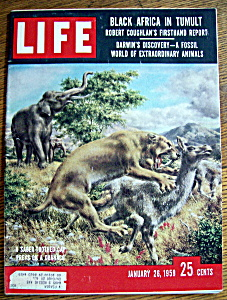 Life Magazine January 26, 1959 Saber Toothed Tiger