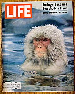 Life Magazine - January 30, 1970 - Snow Monkey (Image1)