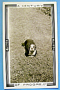 1933 Century of Progress, Dog Running Photograph (Image1)