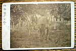 Click here to enlarge image and see more about item 10427: Off To Town - Cabinet Photo of a Man With Horse & Cart