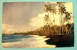 Click to view larger image of Kalapana Beach in Hawaii Postcard (Image1)