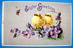 Easter Greeting Postcard with Two Chicks