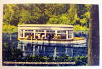 Feeding Fish At Florida Famed Silver Springs Postcard