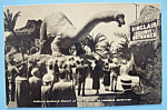 Sinclair Dinosaur Exhibit Postcard-Century Of Progress