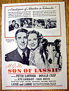 1945 Son Of Lassie With Peter Lawford & Lassie