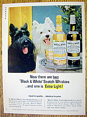 1965 Black And White Whiskey W/ Black & White Scotties