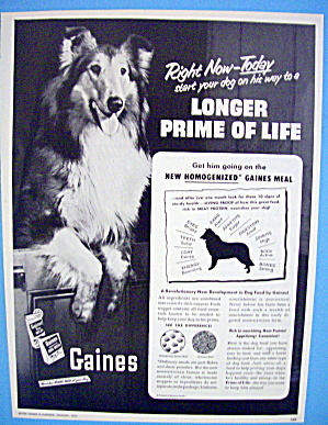 1954 Gaines Dog Food  with Dog Like Lassie (Image1)
