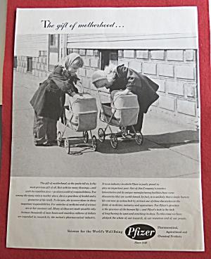 1958 Pfizer w/2 Little Girls Pushing Their Baby Buggies (Image1)