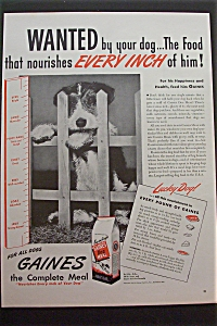 1945 Gaines Dog Meal with Puppy Looking Through Fence (Image1)