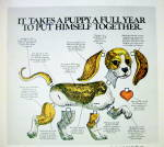 Click to view larger image of 1976 Purina Puppy Chow with A Puppy Paper Doll (Image2)