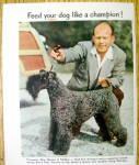 Click to view larger image of 1952 Dash Dog Food with Handler Doug McClain (Image2)