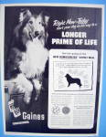 1954 Gaines Dog Food  with Dog Like Lassie