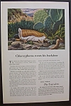 Click here to enlarge image and see more about item 3393: Vintage Ad: 1949 The Travelers