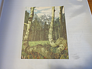 Rapture Lithograph Ideal Print 1950 (Image1)