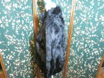 Click to view larger image of Vintage Wilsons Leather Maxima Black Rabbit Fur Jacket  (Image3)
