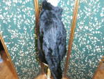 Click to view larger image of Vintage Wilsons Leather Maxima Black Rabbit Fur Jacket  (Image5)