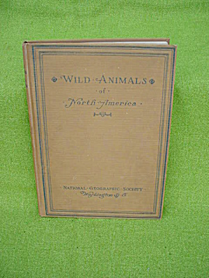 1918 Wild Animals Of North America
