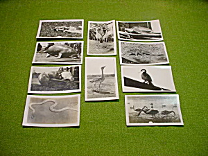Collection of Early Real Photo Animals (Image1)