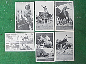 Western Rodeo Postcard Collection