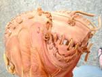 Click to view larger image of Shoeless Joe Catchers Mitt (Image5)