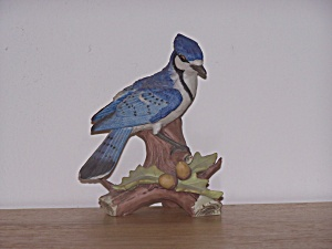 BLUE JAY IN TREE WITH ACORNS (Image1)