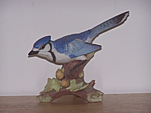 PEERING BLUE JAY IN TREE BRANCH (Image1)