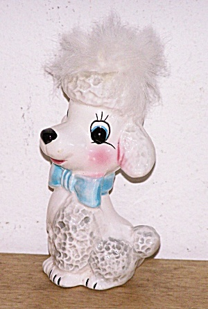 White Poodle With Shock Of White Hair