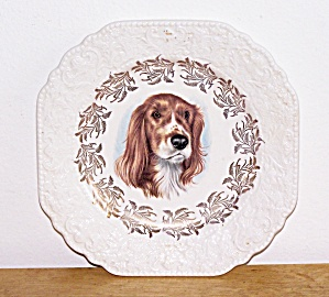 Dog Plate, Lord Nelson Pottery, England