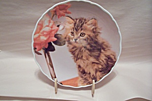 Royal Albert Bone China Cute Kittens - Tiger - Plate